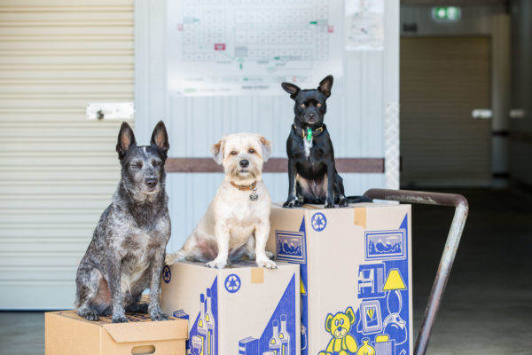 The staff member's dogs sitting on packing boxes at cairns beaches storage in Cairns