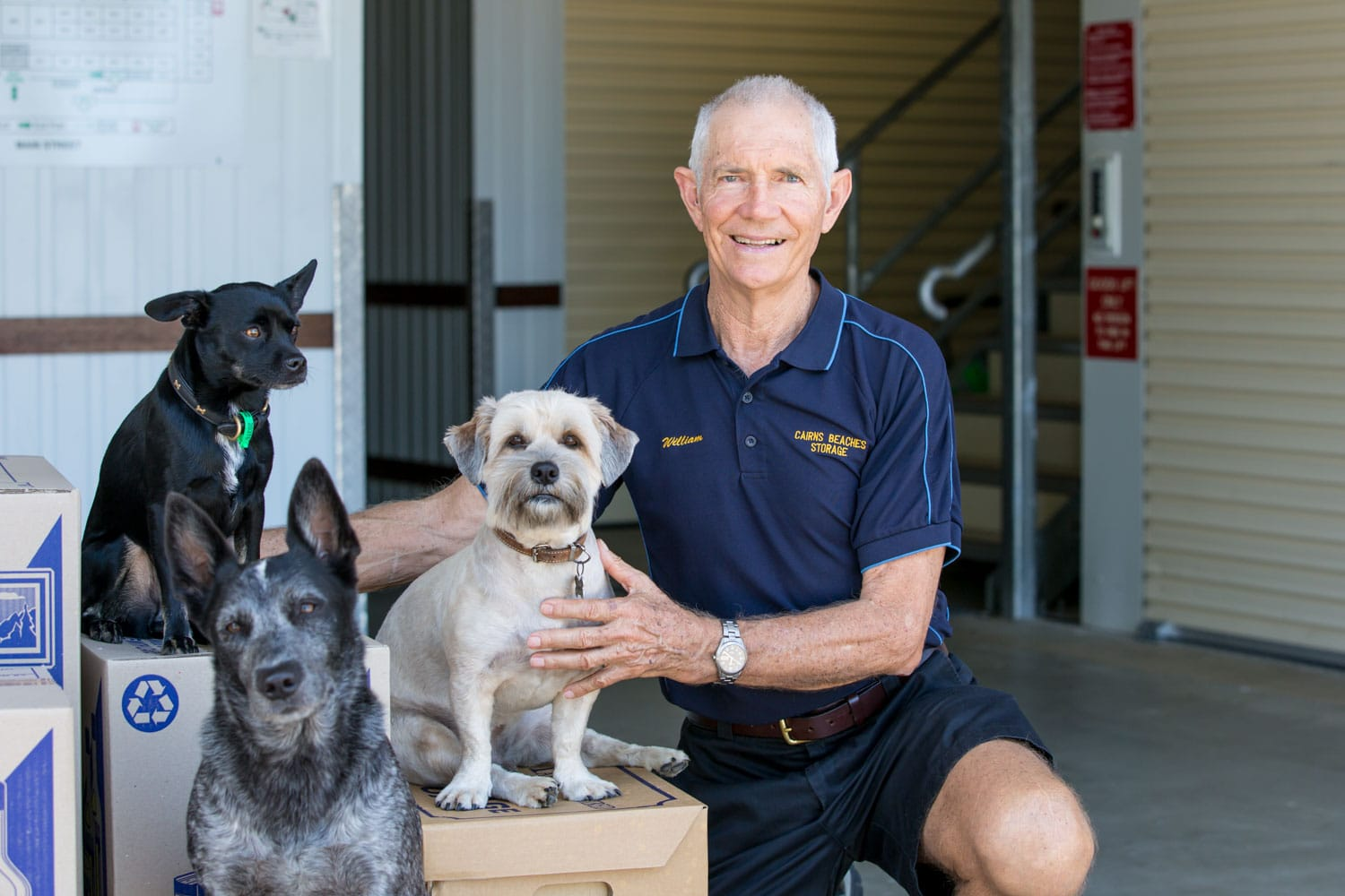 Dogs sitting on packing boxes with owner at cairns beaches storage in Cairns